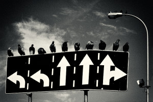 Crows and road signs